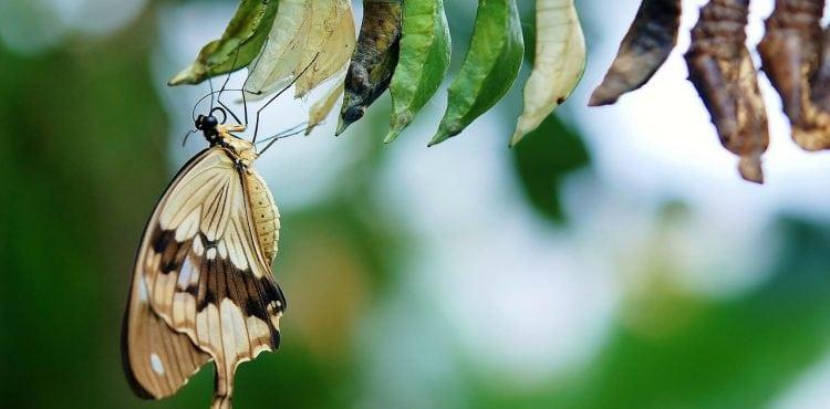 Gir du slipp sommerfugl